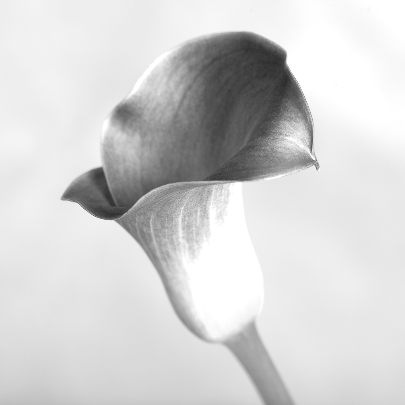 Botanical home decor of black and white calla lillies