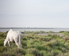 Home Decor photo of a horse grazing in the wild