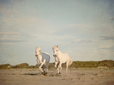 Wall art photo of white horses galloping on the beach