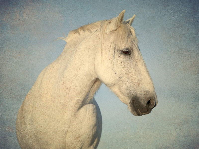 A wall art portrait of  a beautiful white horse