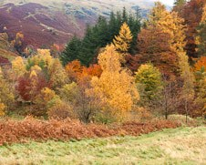A photo of bushes in bright autumn colors near lake Windermere