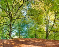 Autumn photograph of Windsor Great Park