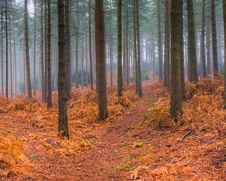 wall art photo of a autumn woodland in Windsor Great Park