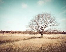 Wall art photo of a lone tree at Richmond Park in London