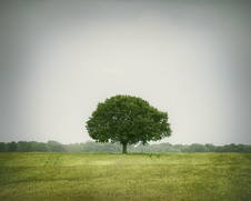 Wall art photo of a lone tree in the fields