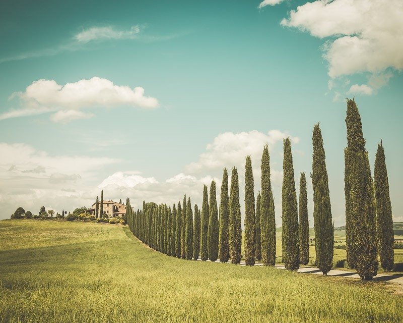 A fine art print of  Tuscan villa lined up with cypress trees