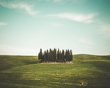 A moody fine art print of a neat group of cypress trees in a valley